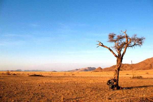 Life saving tree - Namib Desert