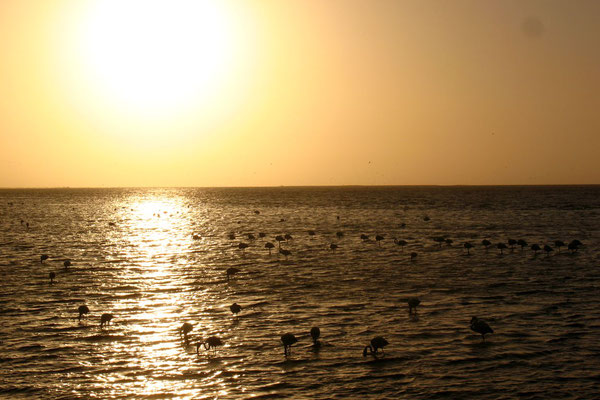 Flamingos - Sunset at Walvis Bay Lagoon