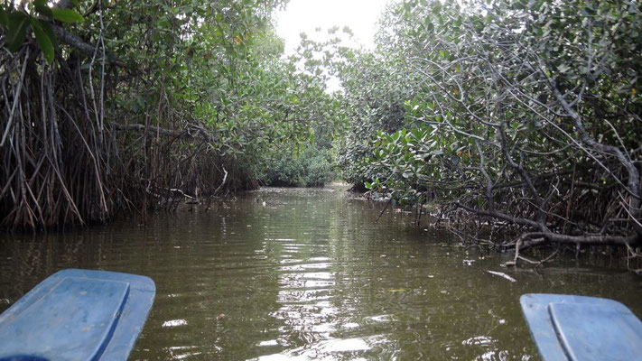 Mangroves at Pottuvil Lagoon