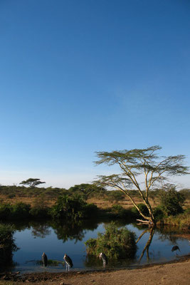 Waterhole - Serengeti National Park