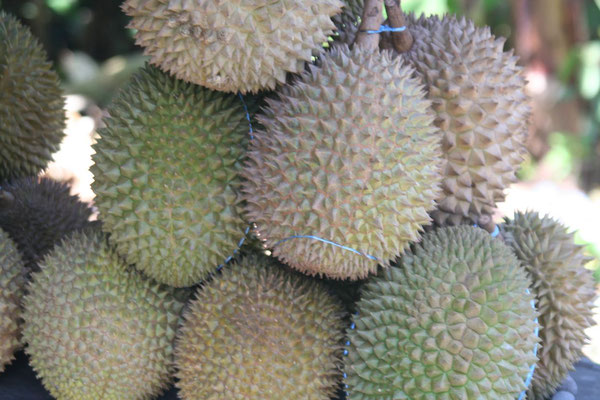 Durian Fruits - North of Padang - Western Sumatra