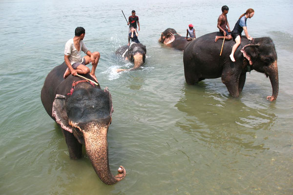 Bathing with elephants - Rapti River - Royal Chitwan National Park