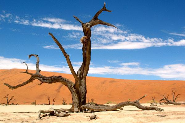 Dead Vlei - Sossusvlei Reserve - Namib Desert