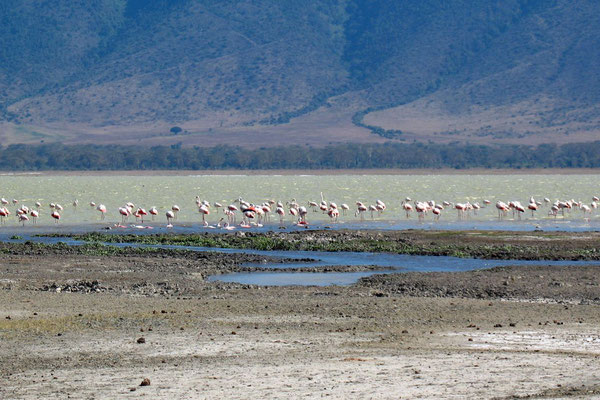 Flamingos - Ngorongoro Crater