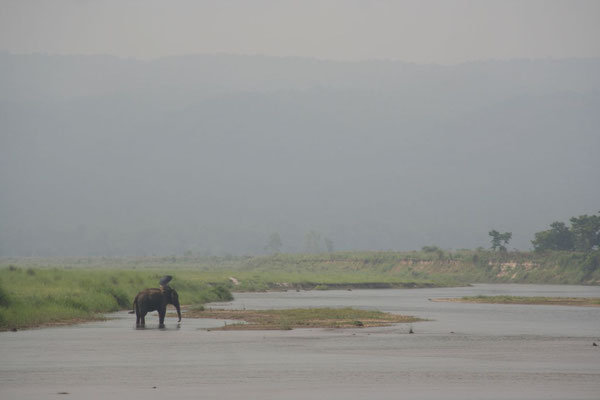 Elephant at Rapti River - Royal Chitwan National Park