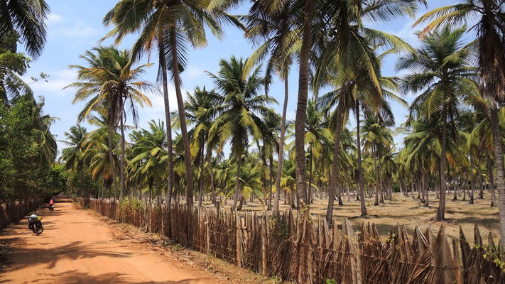 Cycling south towards Chilaw - Sri Lanka West Coast