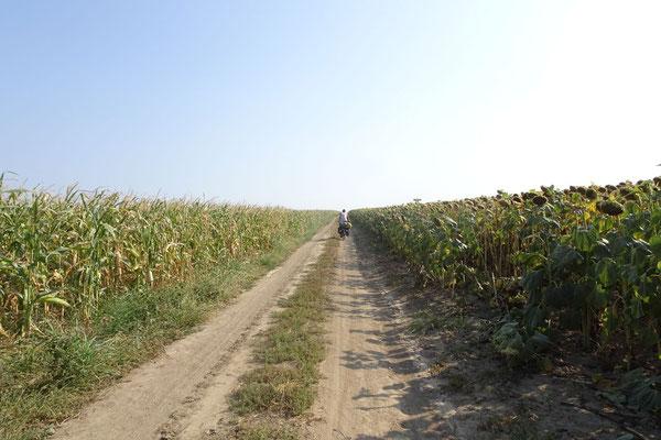 Near Vadu - Constanta Province - Romania