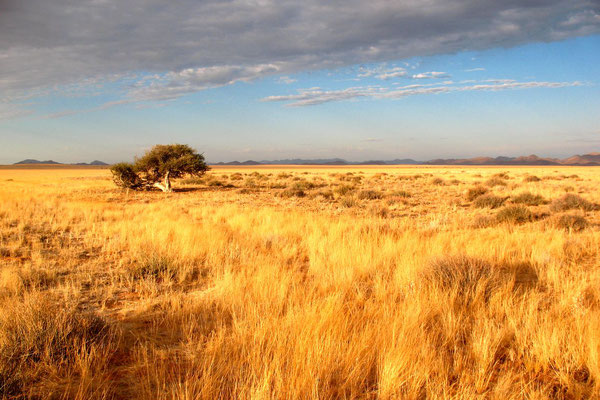 Namib Naukluft Park - Namib Desert