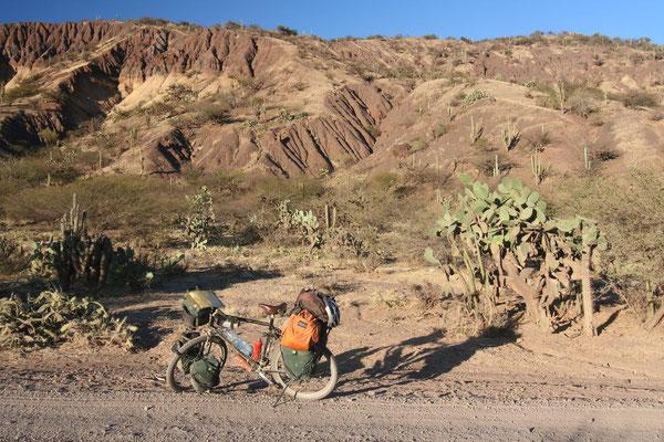Cacti near Huanta - Huancavelica Province