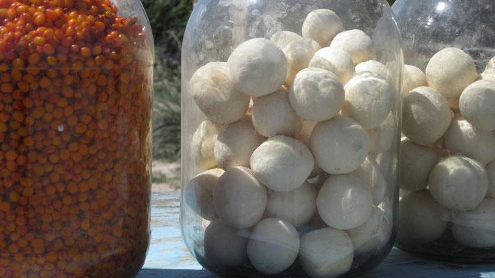 Suzma - dried horse milk balls - Issyk-Kul Lake - Kyrgyzstan