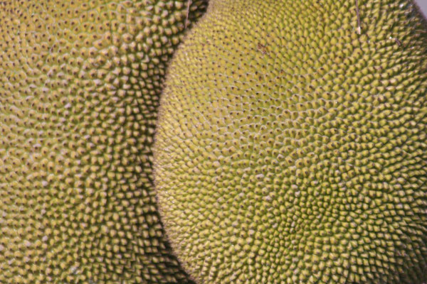 Jackfruits - West of Paga - Eastern Flores