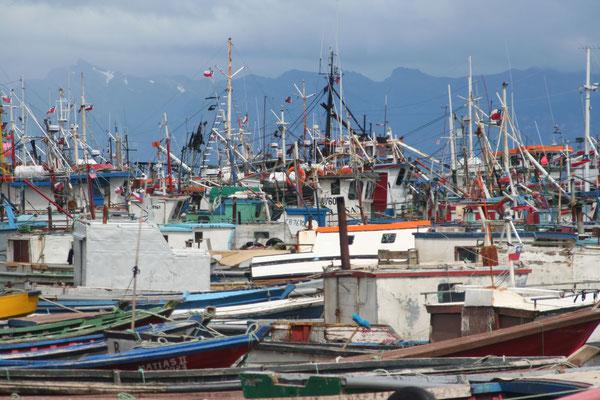 Harbour - Puerto Natales