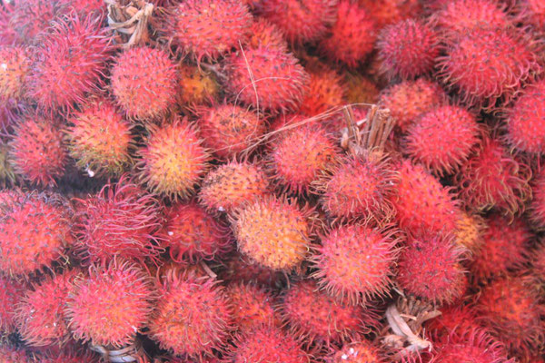 Litchi Fruit - Porsea - Northern Sumatra