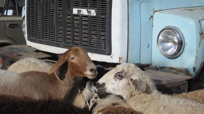 Animal Market - Karakol - Kyrgyzstan