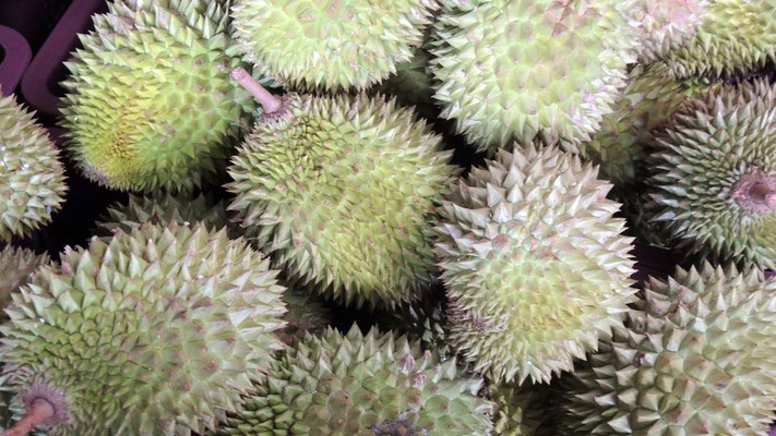 Durian Fruits - Dambulla Wholesale Market