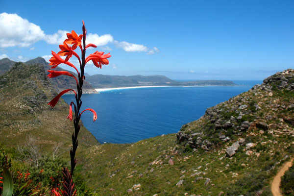 Hout Bay - Cape Peninsula