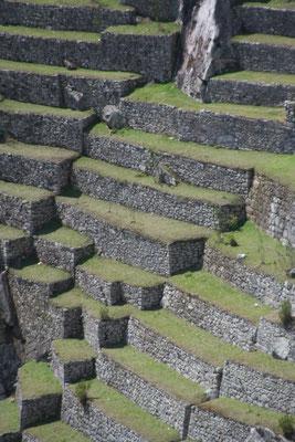Inca terraces - Machu Picchu