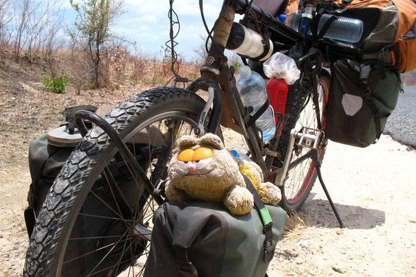 Hugo´s Garfield getting a ride on my bike - Tete Corridor