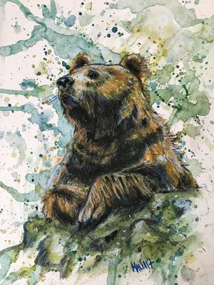 """""""Canadian Bear"""", A3, Aquarell/Ölkreide & Farbstifte auf Papier, 2017 __CHF 180.-"""
