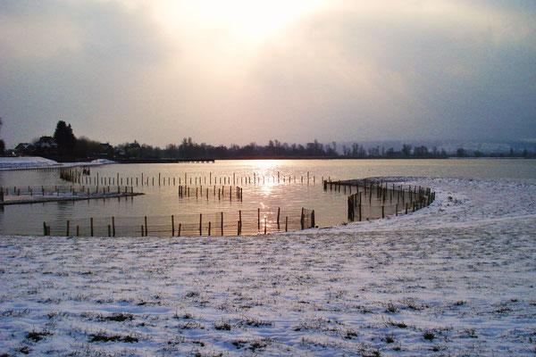 """""""Effet de lumière sur l'eau"""" (Lac du Bourget en hiver) - M. Philippe BOUVIER"""