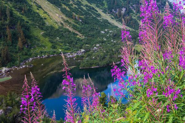 der untere Murgsee hinter schmalblättrigen Weidenröschen