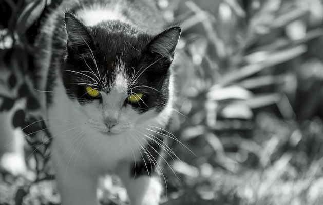 yellow eyes