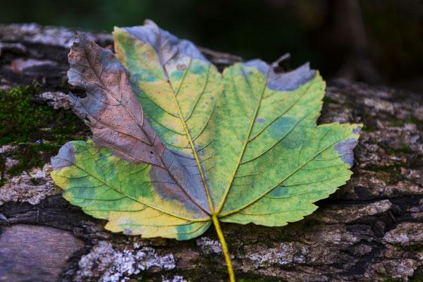 Pastellfarben im Herbst