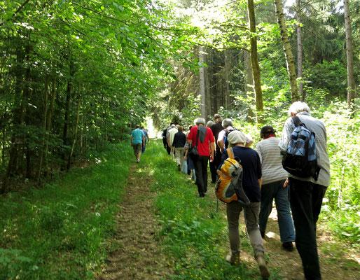 Auf dem Weg durch den Wald zur Bakuninhütte.