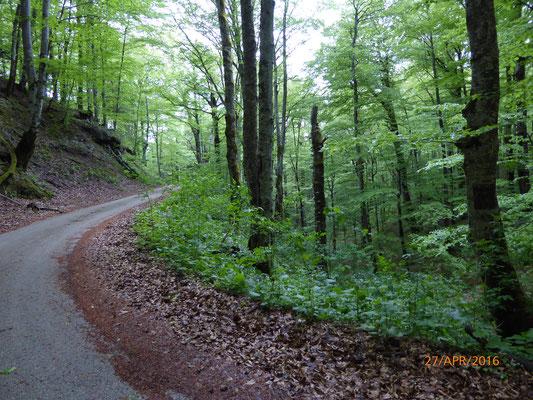 Der düstere Wald...