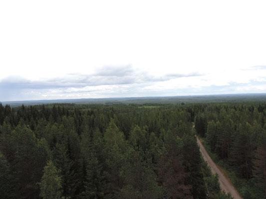 Endlose Wälder, egal wohin man schaut