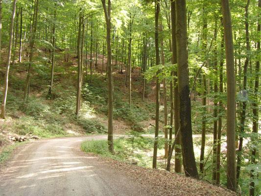 Mitten durch den Wald....