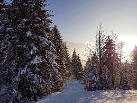 Panasonic Lumix G9 Olympus 12-100 Pro Säntis Schwägalp Winter Schnee Snow Schweiz Berge Mountain Alpen Winterwonderland Zumiko Toyota Hilux Revo #ProjektBlackwolf wolf78 offroad overland Sonne Landschaft Landscape Foto Picture wolf78-overland.ch