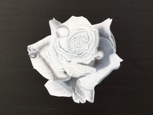 White Rose / Cardboard 25.3x36.3cm