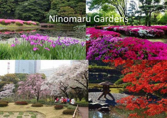 It's said that this garden was designed for the shogun. You can enjoy various types of flowers throughout the year.