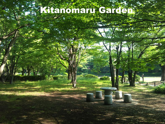 Kitanomaru Gardenis located on the northernmost section of the old Edo Castle. It is now a woodland garden with a large pond and well-kept lawns, surrounded by moats, which makes this area a wild bird sanctuary.