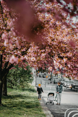 Frühling in Berlin, Sakura, Kirschbaumblüten Berlin, Familienfotograf Berlin, Familienshooting Berlin, Kinderfotograf Berlin, Babybauch Shooting Berlin, Lena Feelings, Elena Tschuikow