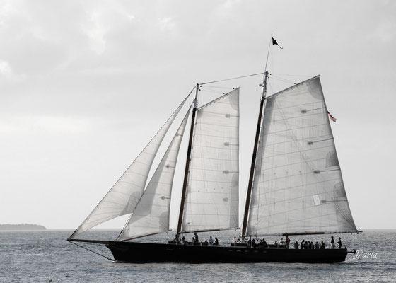 Sail, Key West, January 2014