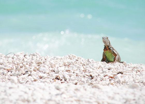 Creepin', Key West, March 2014