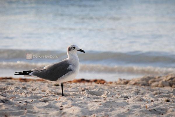 Bird, Watching; Key West: November 2013