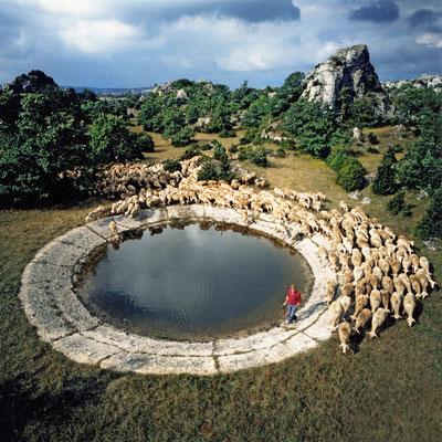 lavogne-et-troupeau-de-brebis-les-rives-sur-le-causse-du-larzac-credit-photo-gite-d'exception-le-colombier-saint-veran