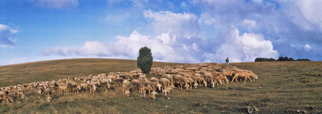 troupeau-de-brebis-sur-le-causse-du-larzac-terre-d'immensite-evasion-grands-causses-en-gite-d'exception-en-aveyron-le-colombier-saint-veran-credit-photo-mcg