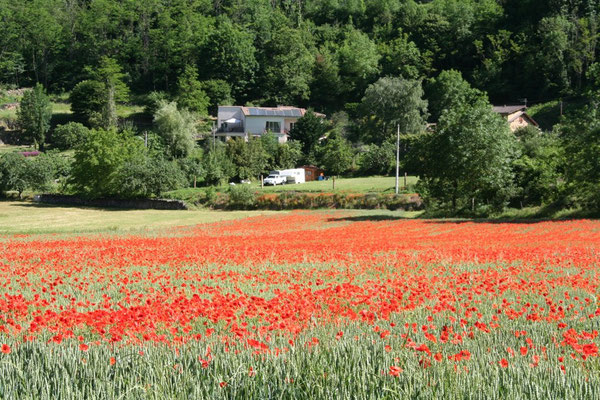 Villa behind poppies