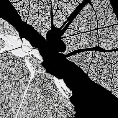 L'exquise métamorphose, 60*60 cm, 2013