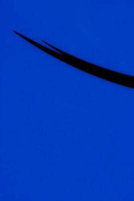 Blue Field I, 60*90, 2016