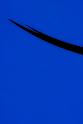 Blue Field I, 60x90 cm, 2016