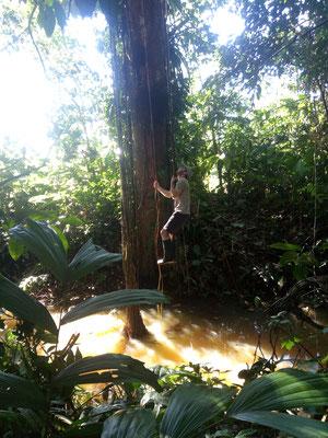 Jérôme qui joue à Tarzan sur une liane fraîchement coupée par Ernesto !