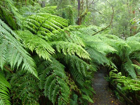 Rando dans la forêt Melba Guly