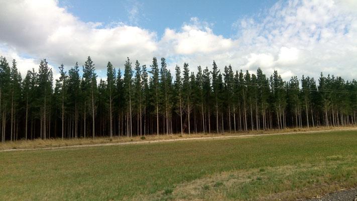La forêt cultivée