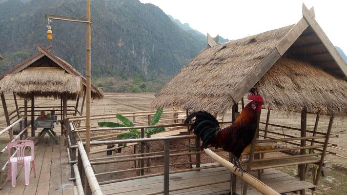 Notre petit resto sur les rizières, sauf qu'il y a pas encore de riz :)