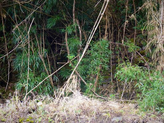 Regardez bien, il y a un mur incas caché derrière cette végétation !